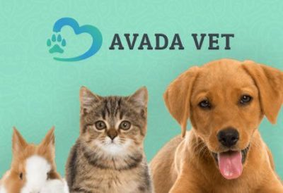 Web Design Veterinary | WordPress WebSite Proposal